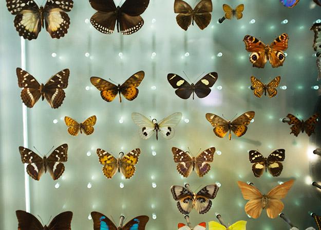 martin_vallin_butterflies